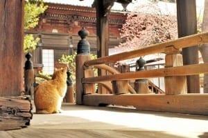 Japan Tours, Wabisabi