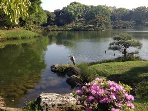 Japanese garden. travel company