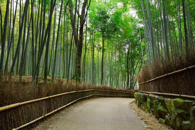 Arashiyama Kyoto Luxury Travel