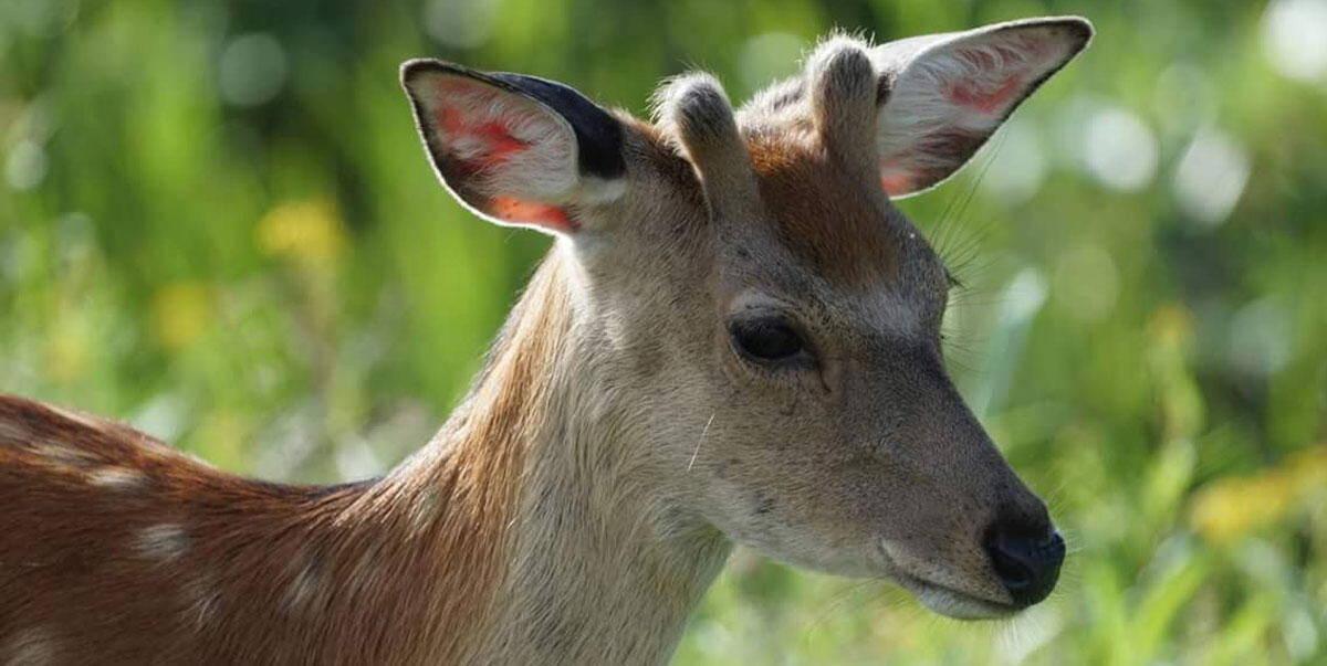 Wild Animal in Hokkaido