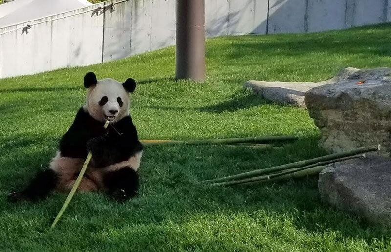 panda, Shirahama Adventure World