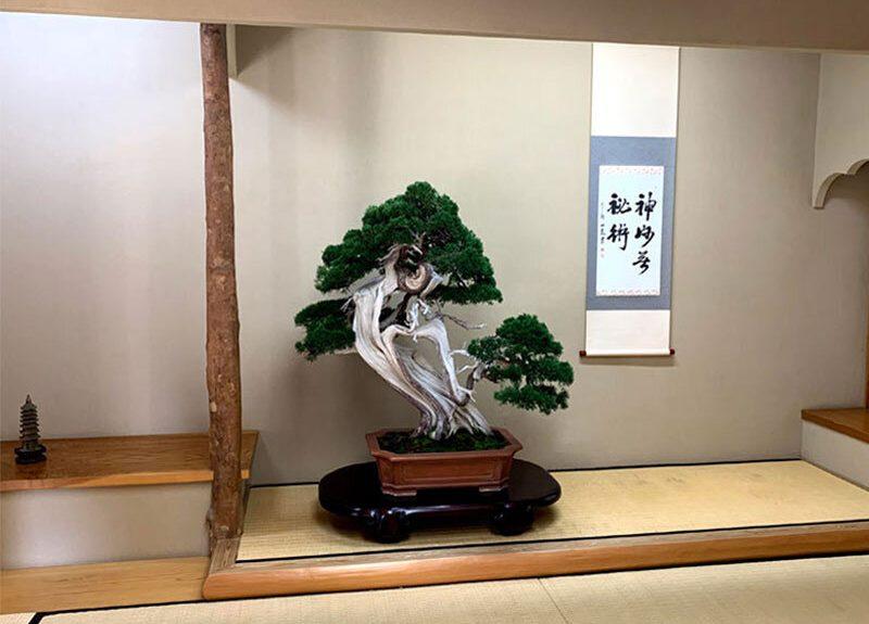 Luxury Travel Japan Bonsai making experience